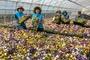 포천시농업기술센터, 실증재배용 꽃묘 분양